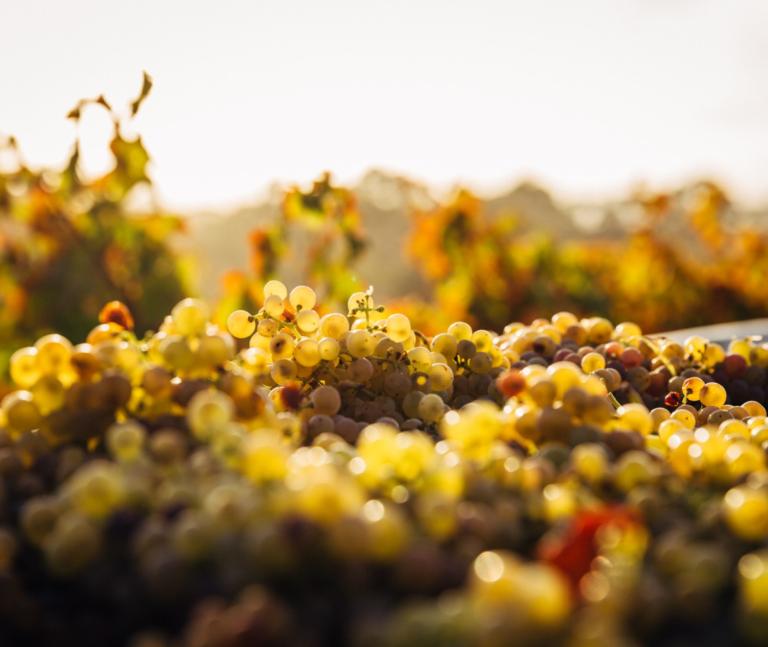 vineyards in cambridge